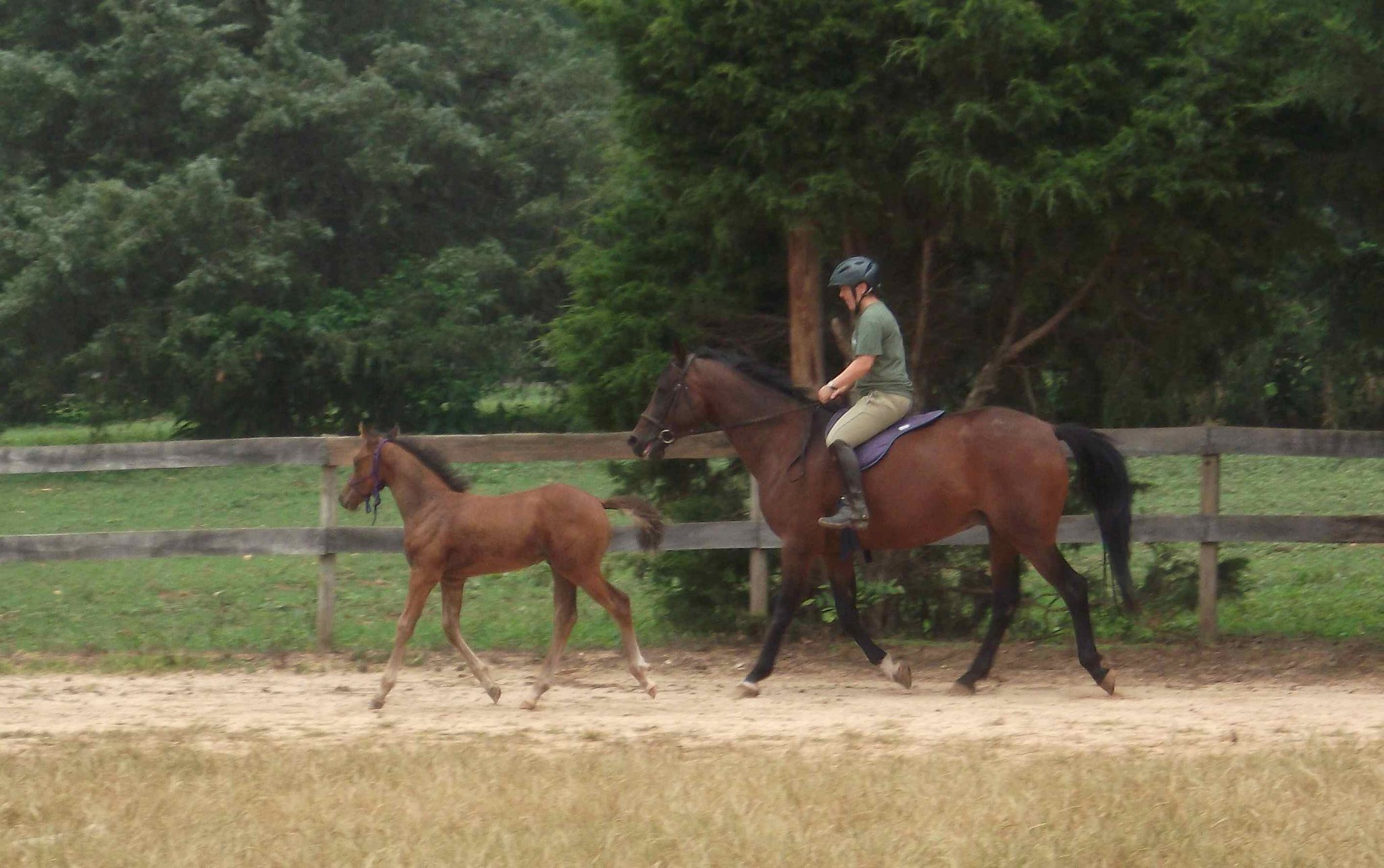 Juliette with foal Q Xoshi Tempest