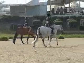 _Cabaret_ Large Pony Under Saddle - Pony Finals 2010-.3gp