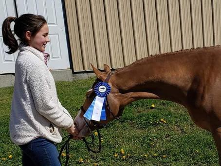 Champion Pony Hunter Breeding &Best Young Pony at Westbrook Hunt Club