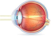 Human eye cross section graphic