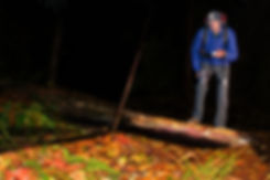 cyrad headlamp, leglight, and flashlight system at night in Fall