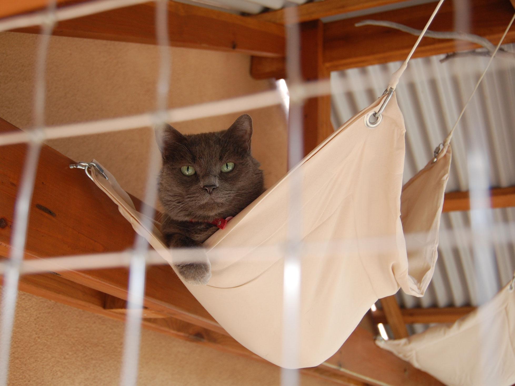 Boris in hammock