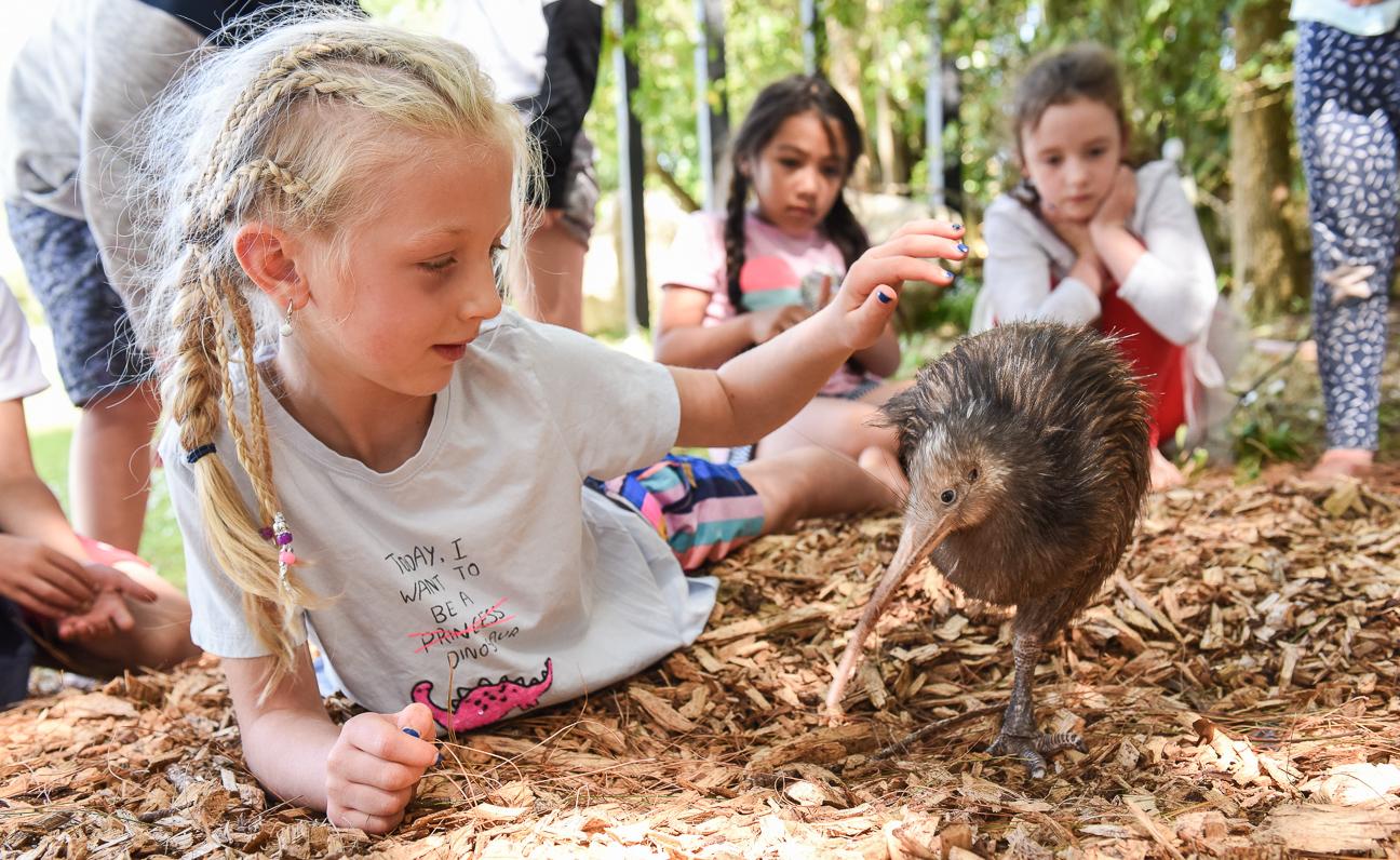 Kiwi at Maunu Primary-1