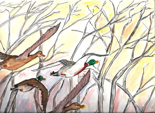 From a story for children. Mallard ducks flying across the evening sky. A children's illustration.