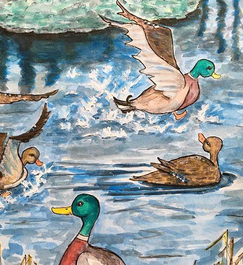 jake the drake, mallard, ducks, splashing, swimming