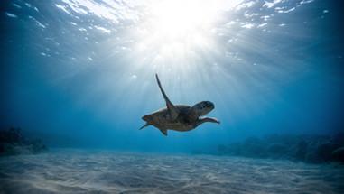 animal-animal-photography-aquatic-239765