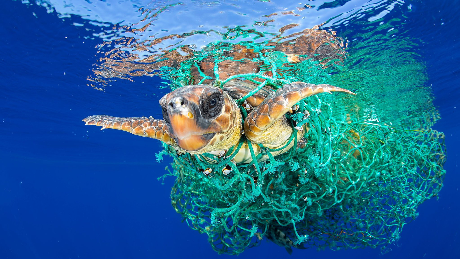 ocean-plastic-pollution.jpg
