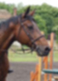 chevaux demi pension epinay champlatreux