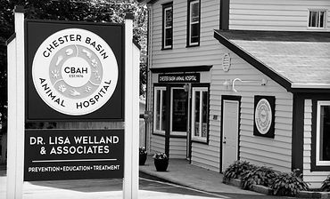 Chester Basin Animal Hospital Sign