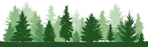 bosque4.jpg
