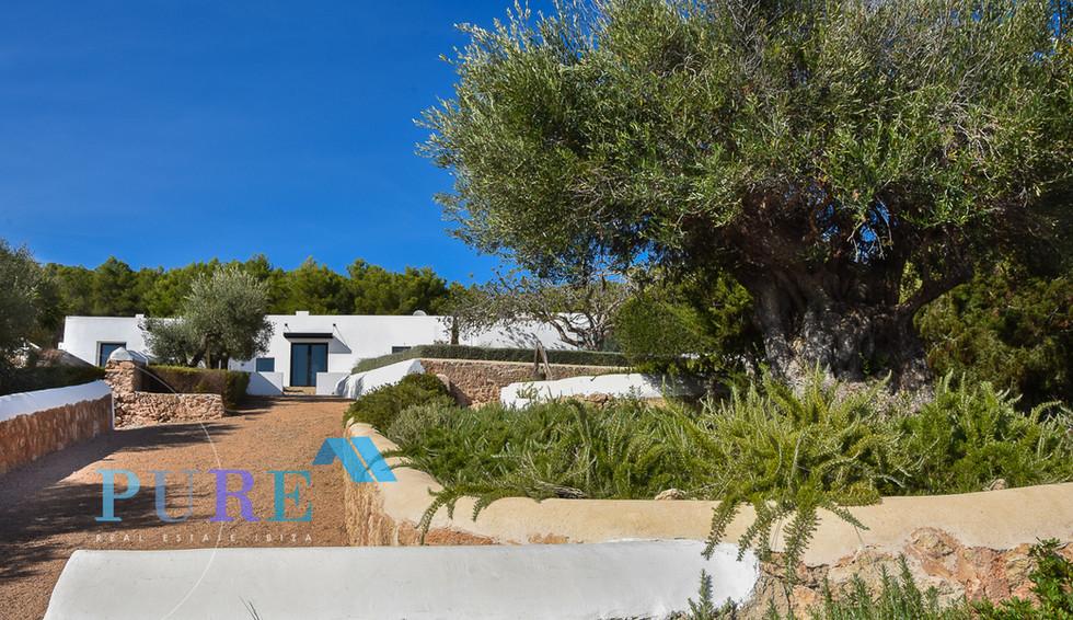 PURE Ibiza-3709.JPG