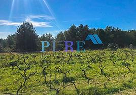 PURE Ibiza-4.JPG