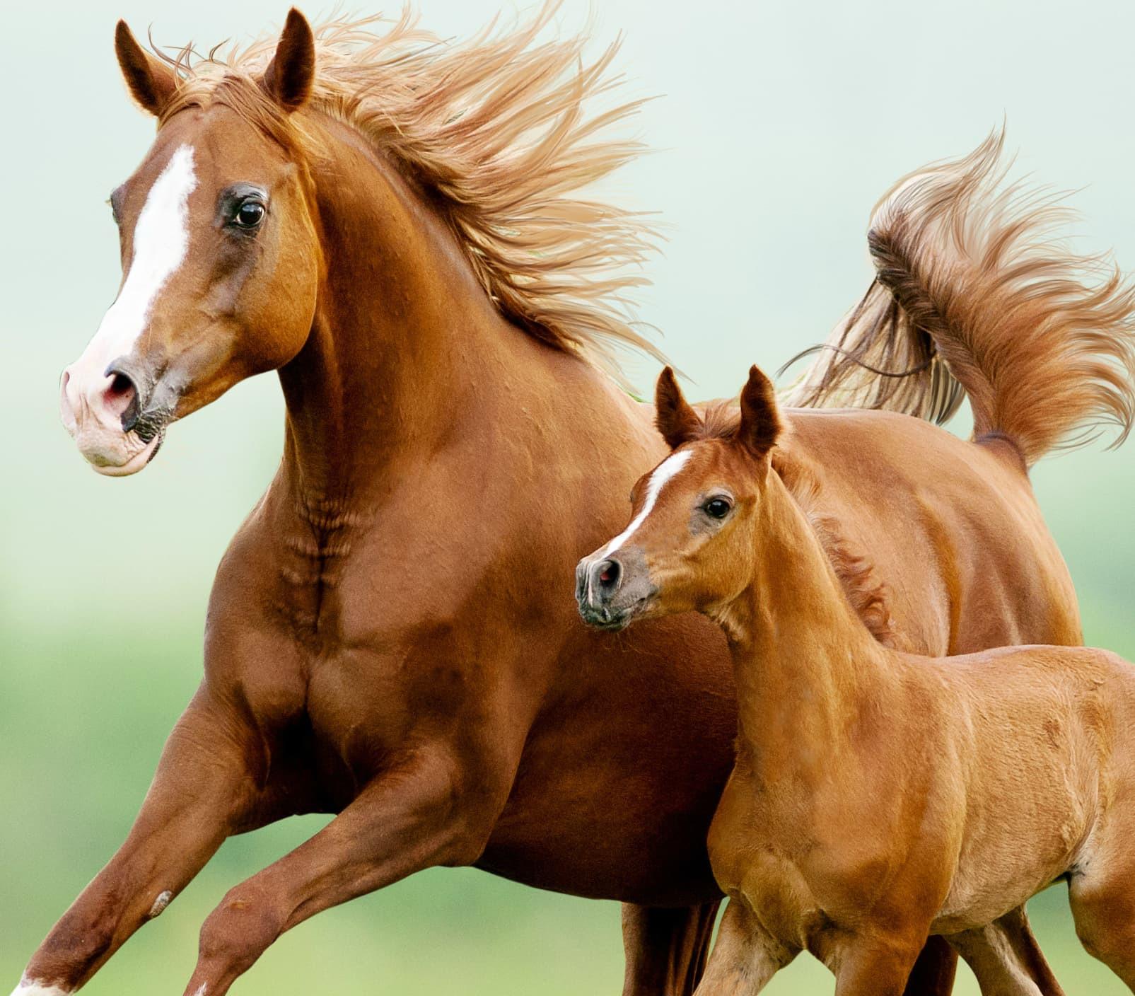 Parent and Me Horseback Riding
