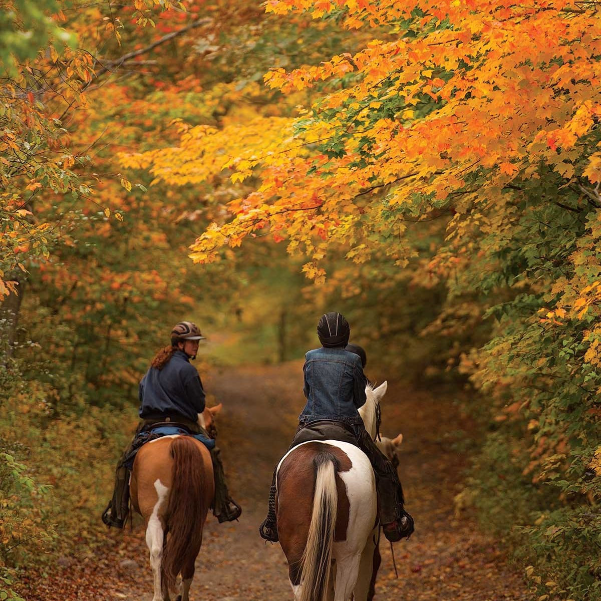 Lesson and Trail Ride for Two.