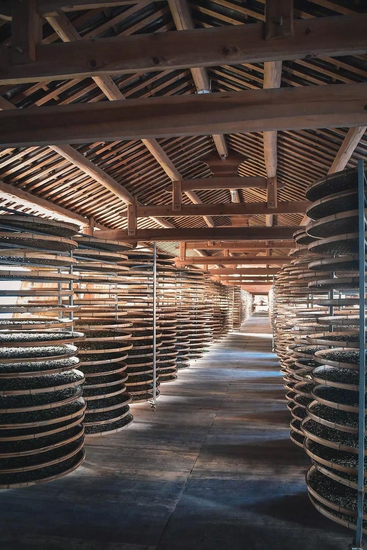 Teeherstellung in China: Teeblätter werden auf flachen Körben aus Bambus getrocknet