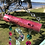 Thumbnail: Pink Glistening 3 Peacocks