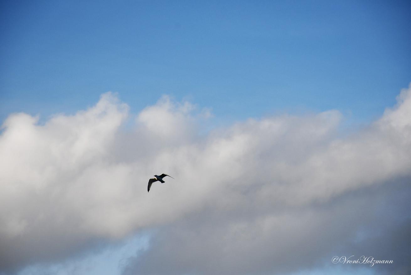 Bird in the Sky