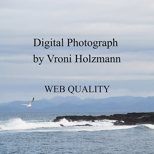 Digital Photograph by Vroni Holzmann - Web Quality
