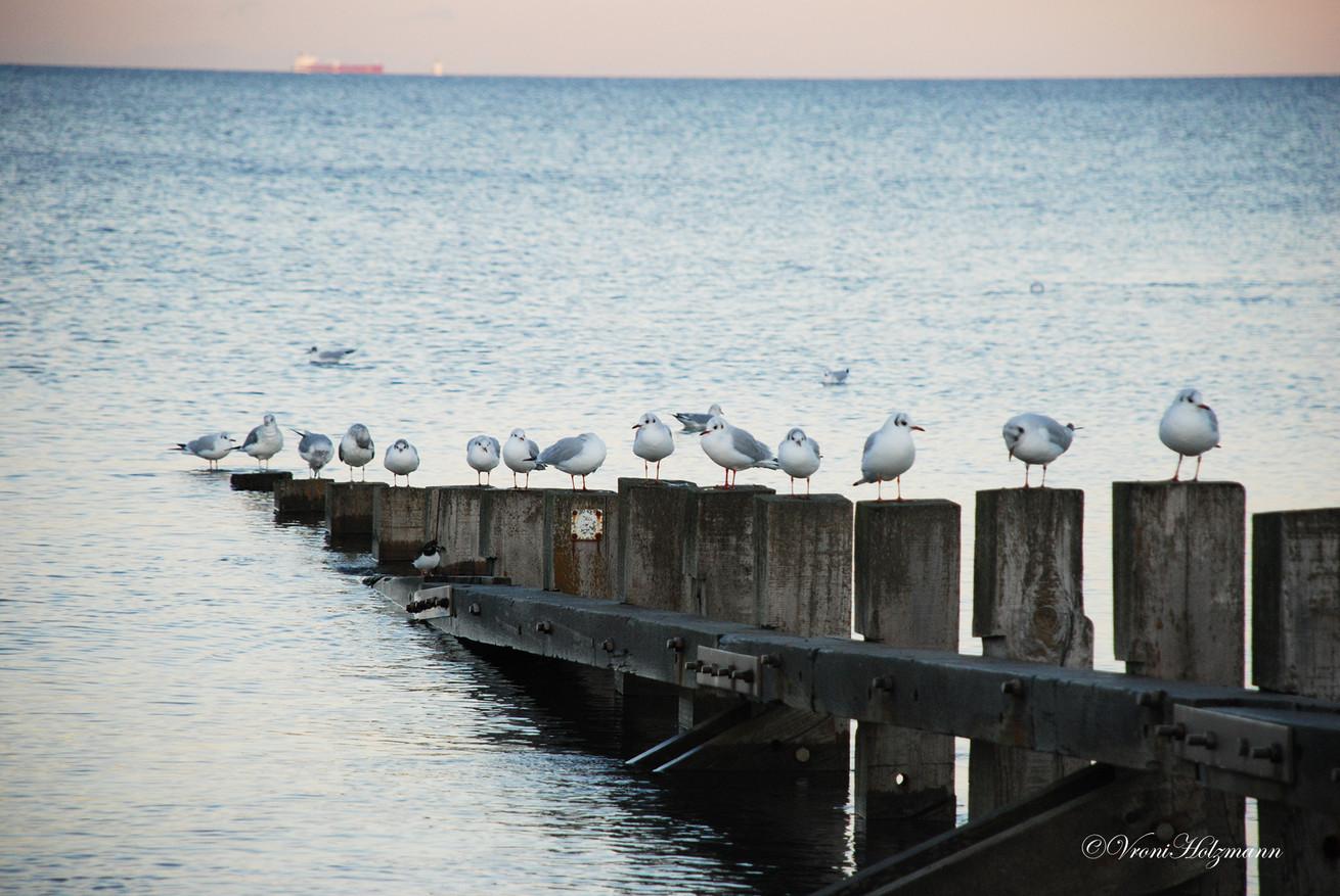 Seagulls in Portobello