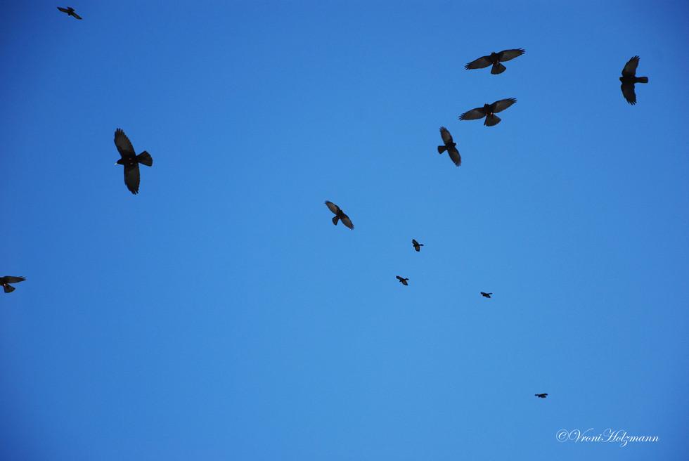 Birds circling the sky