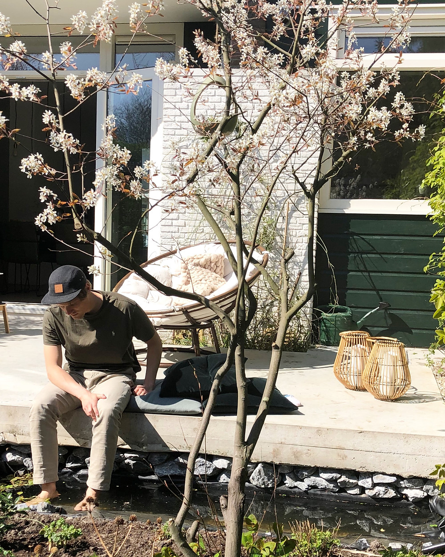 Krentenboom, oftwel amelanchier lamarckii in de tuin van de tuinarchitect rotterdam, studio linda lavoir, die ook wel in zeeland als tuinarchitect werkt