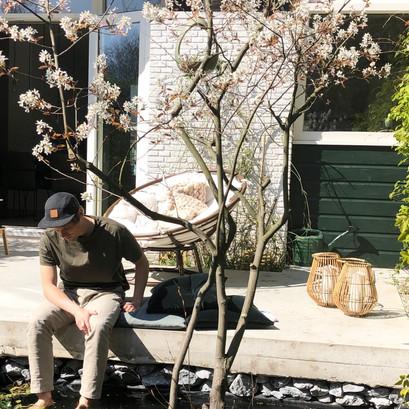 Mijn 3 favorieten bes-dragende & vogel-vriendelijke bomen/struiken