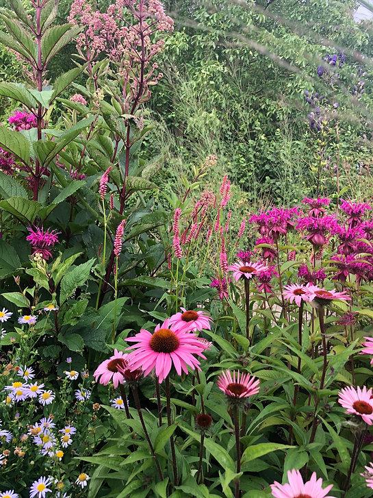 ontwerp beplantingsplan, beplantingsplan tuinontwerper, beplantingsplan studio linda lavoir, beplantingsplan natuurlijke border, vaste planten en siergrassen, tuinachitect rotterdam met plantenkennis