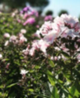 Flexibele zitplekken. Dat was de grootste eis voor deze tuin. De tuin heeft een enorme oppervlakte waar deze eis helemaal tot zijn recht kan komen. Zon en wind zijn de belangrijkste factoren voor de keuze van de - op dat moment - lekkerste zitplek van de tuin. Hagen, bomen, vaste planten en siergrassen vormen de basis voor de zitplekken die inspelen op deze twee factoren.