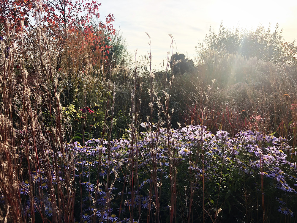 Elk seizoen heeft zo zijn charmes, maar voor mij spant de herfst de kroon. Met haar lage zonnestand, de pluimen van siergrassen die zilver en goud oplichten, de bomen die prachtig verkleuren, de Asters die voor paarse en lila kleur zorgen, de geur van afgestorven bladeren en de diertjes die allemaal druk in de weer zijn om zich voor te bereiden op de winter zorgt voor kriebels in mijn buik. De natuur sluit haar seizoen af met een overdosis kleur voordat ze grijs en grauw wordt.   Het knusse gevoel van de herfst is overweldigend wanneer ik in het schermer naar huis loop, de jus van de Hollandse kost door heel de straat ruik en ik thuis kom en daar de kachel al aanstaat. Ik geniet nog even voor zolang het duurt om mij daarna voor te bereiden op de winter, waar ik overigens ook geen hekel aan heb. Geniet jij ook zo van de herfst? Ik ben benieuwd naar jouw beleving!