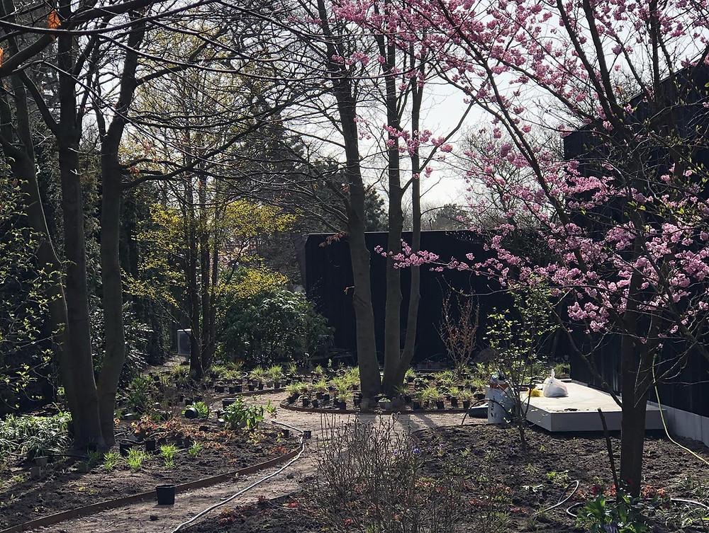 Bostuin, woodland garden