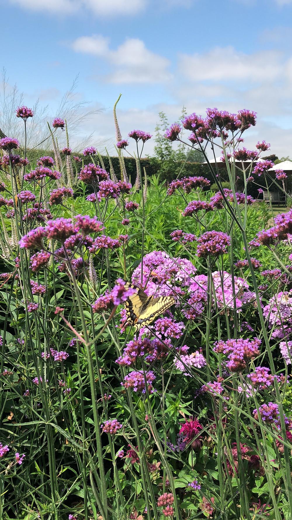 Wil jij ook een vlindervriendelijke tuin en genieten van al dat vrolijke gefladder, maar weet je niet welke planten daar het beste geschikt voor zijn? Lees hier welke vlinder bij welke plant hoort