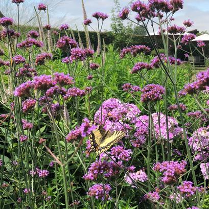 Ontdek hoe jij de vlinders in je tuin haalt!