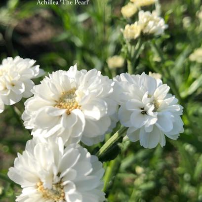 Soorten vaste planten en siergrassen in de testtuin