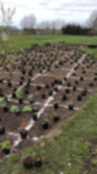 De beste tuinontwerper van Rotterdam,Beplantingsplan ontworpen door Studio Linda Lavoir in Rotterdam