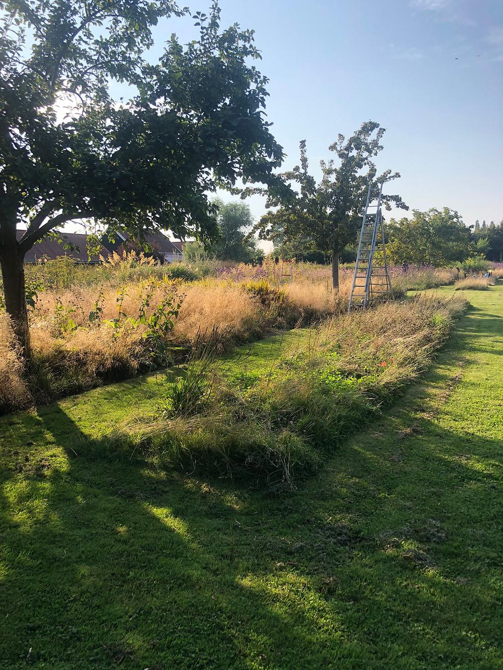 Tuinarchitect regio Rotterdam, tuinarchitect regio Zeeland, studio linda lavoir, ecologische tuinarchitect doet inspiratie op in Middelburg