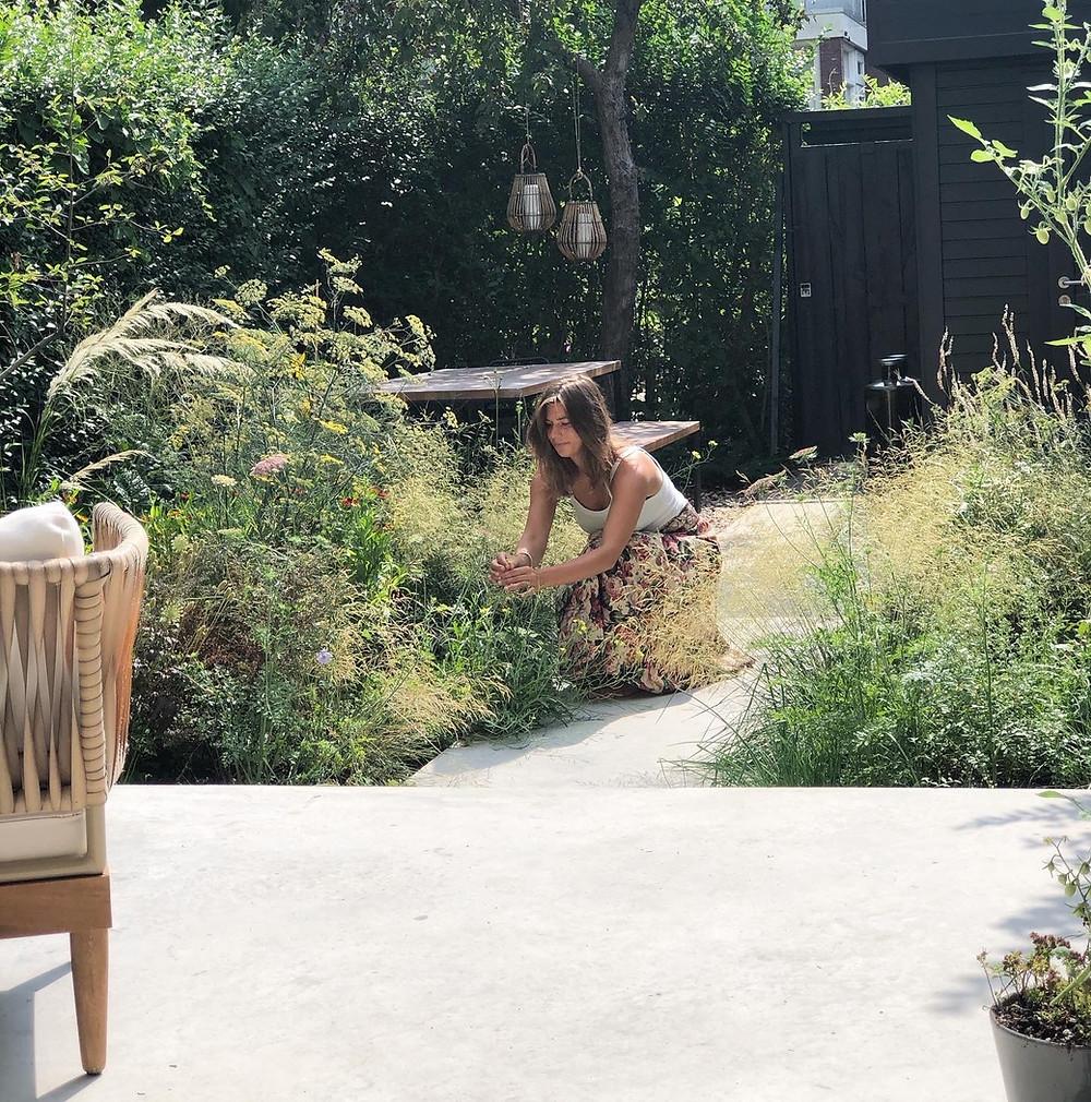 Foeniculum als vitamine toevoer in de tuin