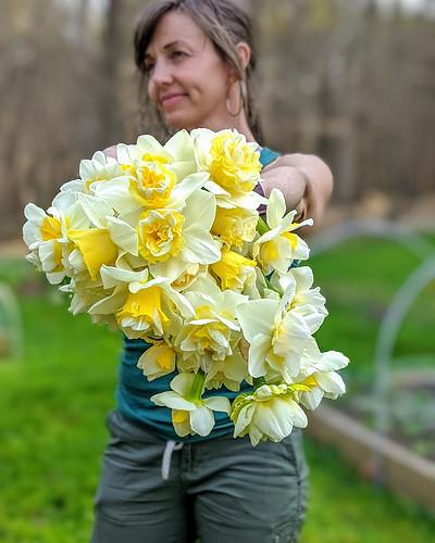 Daffodil growers armload.jpg