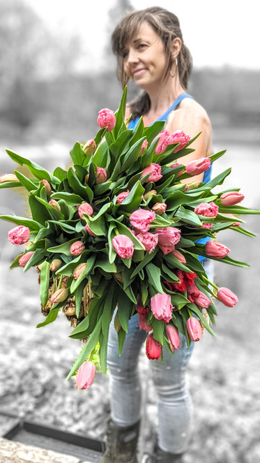 Tulips pink armload.jpg