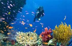 diving jakarta internship.jpg