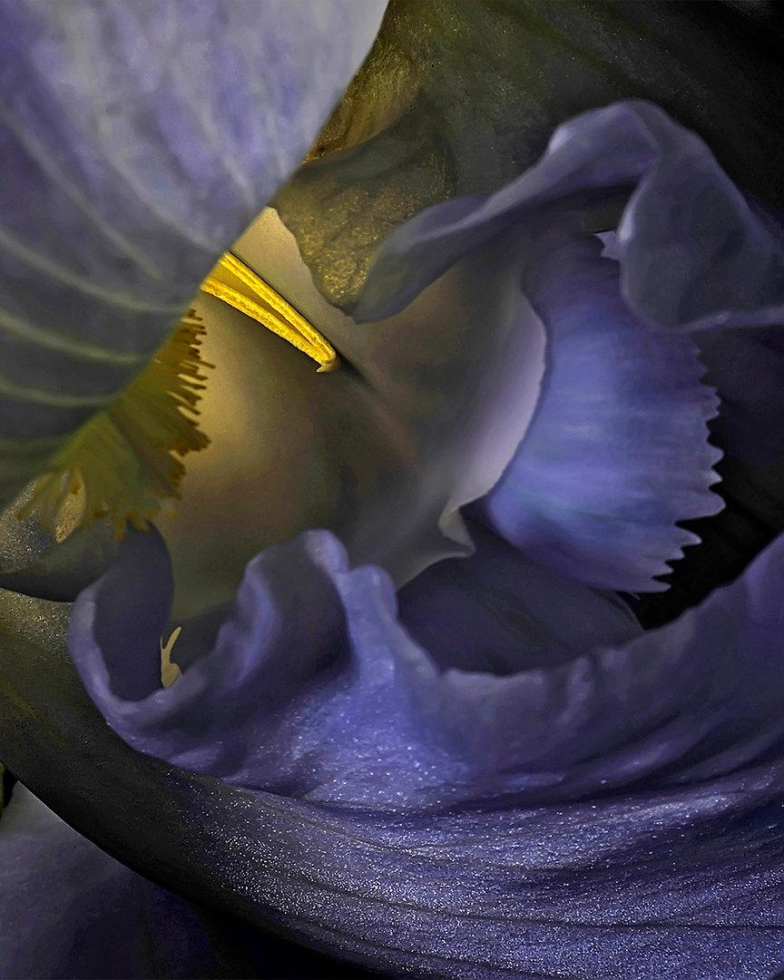 FLOWER Nº 1  Large format fine art photograph by Denis Eugene Robert on TRAGART