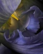 FLOWER Nº 1