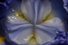 FLOWER Nº 17