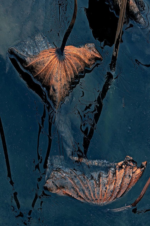 LOTUS Nº 11  Photographie d'art grand format par Denis Eugène Robert sur TRAGART