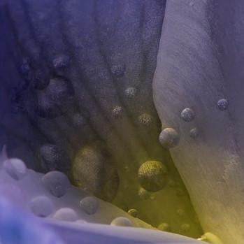 FLOWER Nº 9