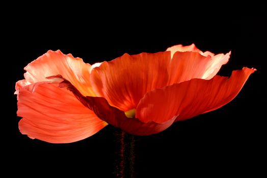 FLOWER Nº 4