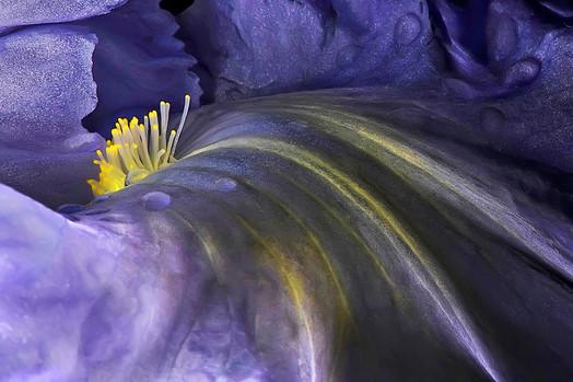 FLOWER Nº 8