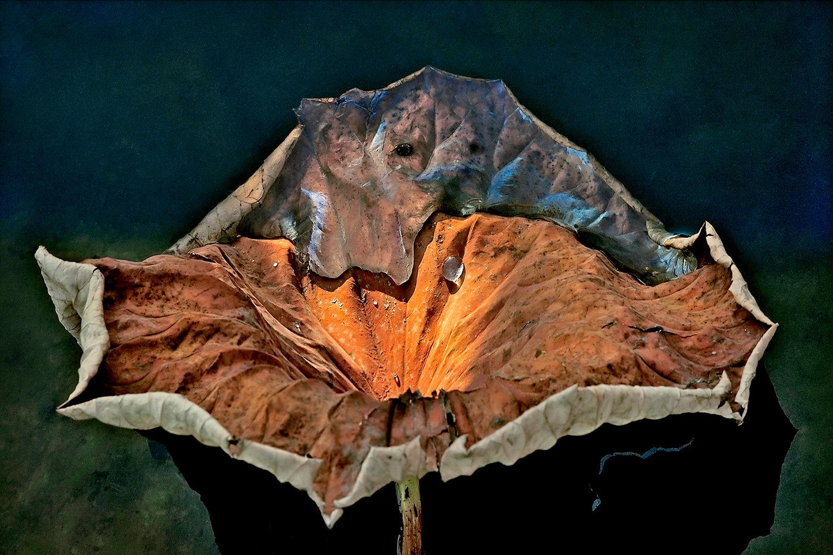 LOTUS Nº 2  Large format fine art photograph by Denis Eugene Robert on TRAGART