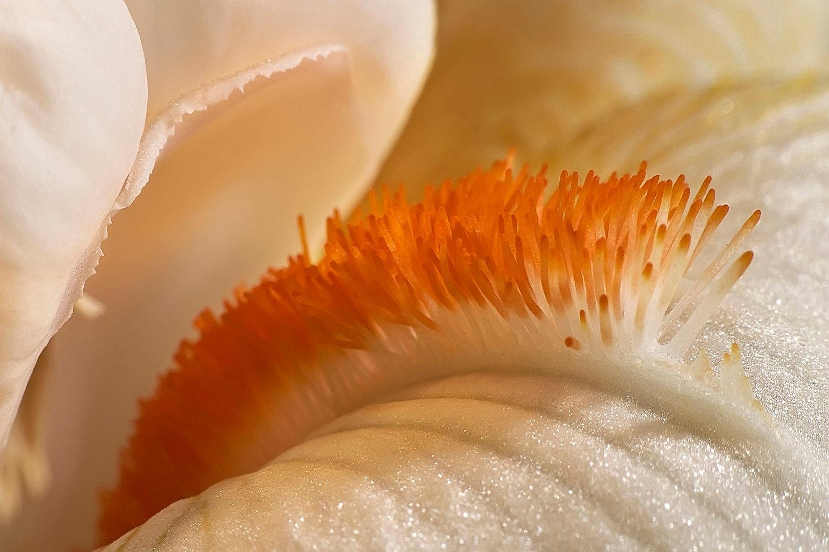 FLOWER Nº 2  Photographie d'art grand format par Denis Eugène Robert sur TRAGART