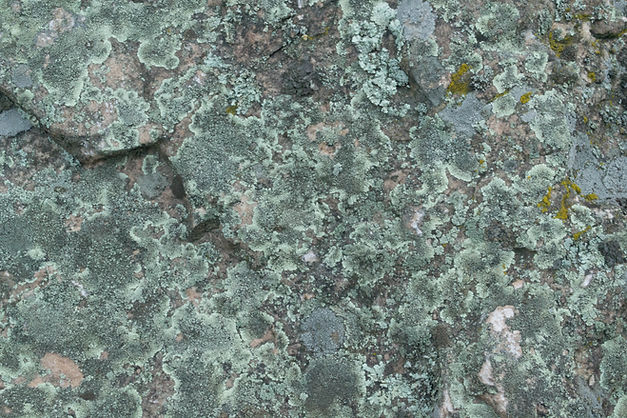 Green Lichen, Flat Irons, CO.jpg