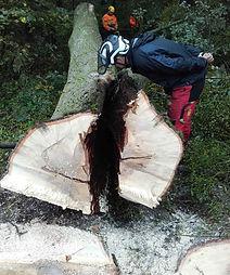 remove-tree-OSA-training-center.jpg